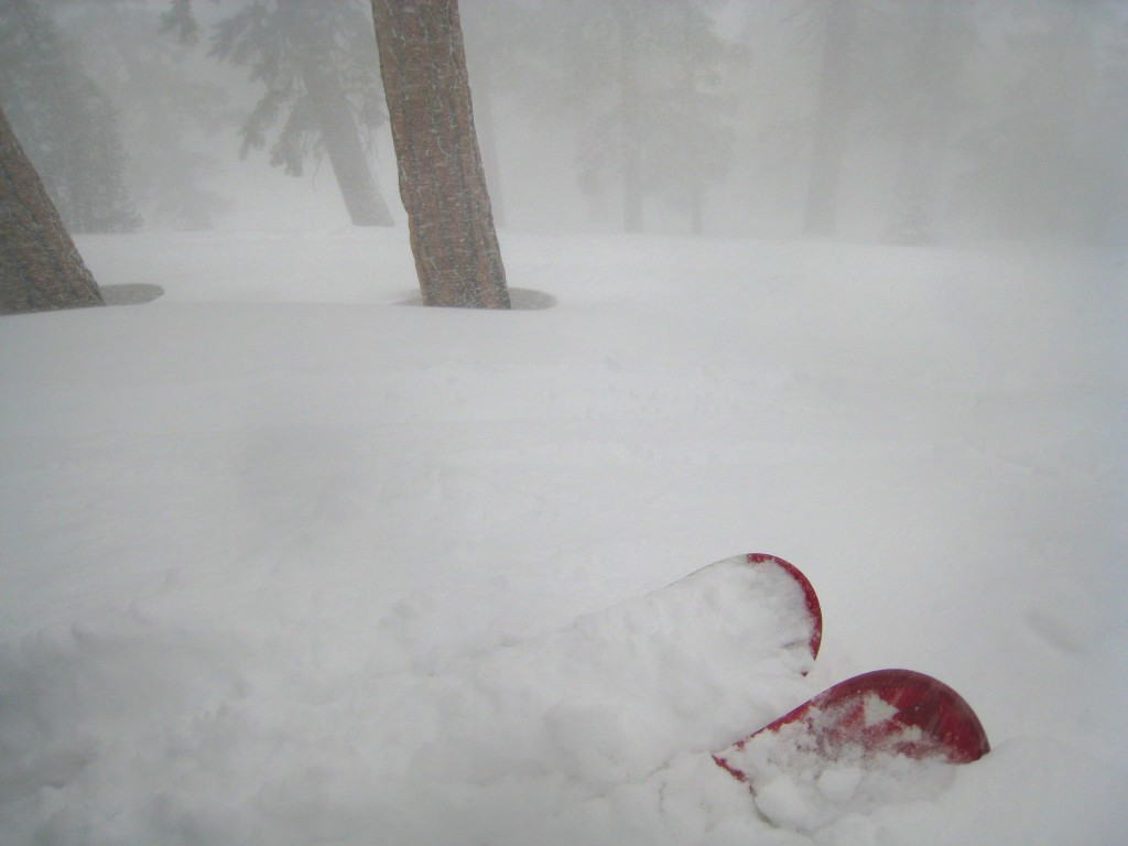 East Bowl Trees during a storm - February 2011