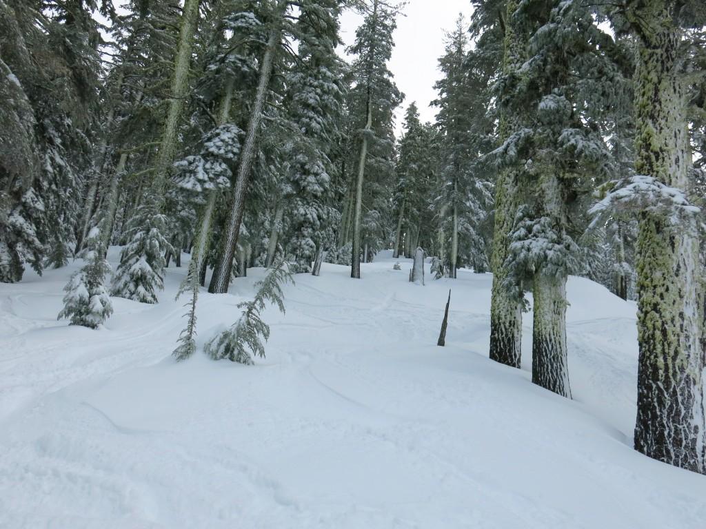 West Bowl trees, Sierra at Tahoe, January 2016