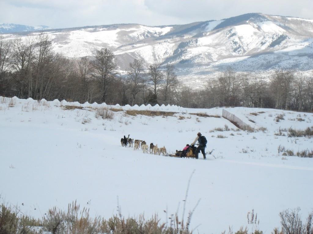 Dog Sledding near Beaver Creek