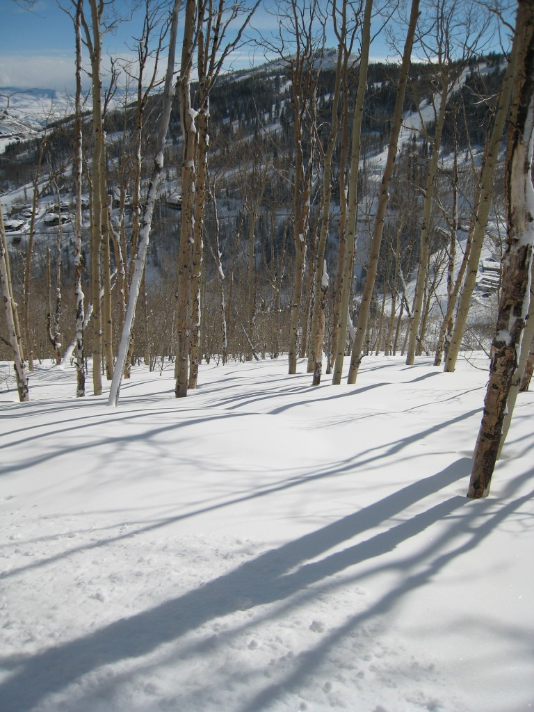 Aspens on a powder day at Deer Valley