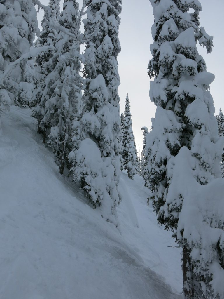 Steep trees at Brundage, December 2015