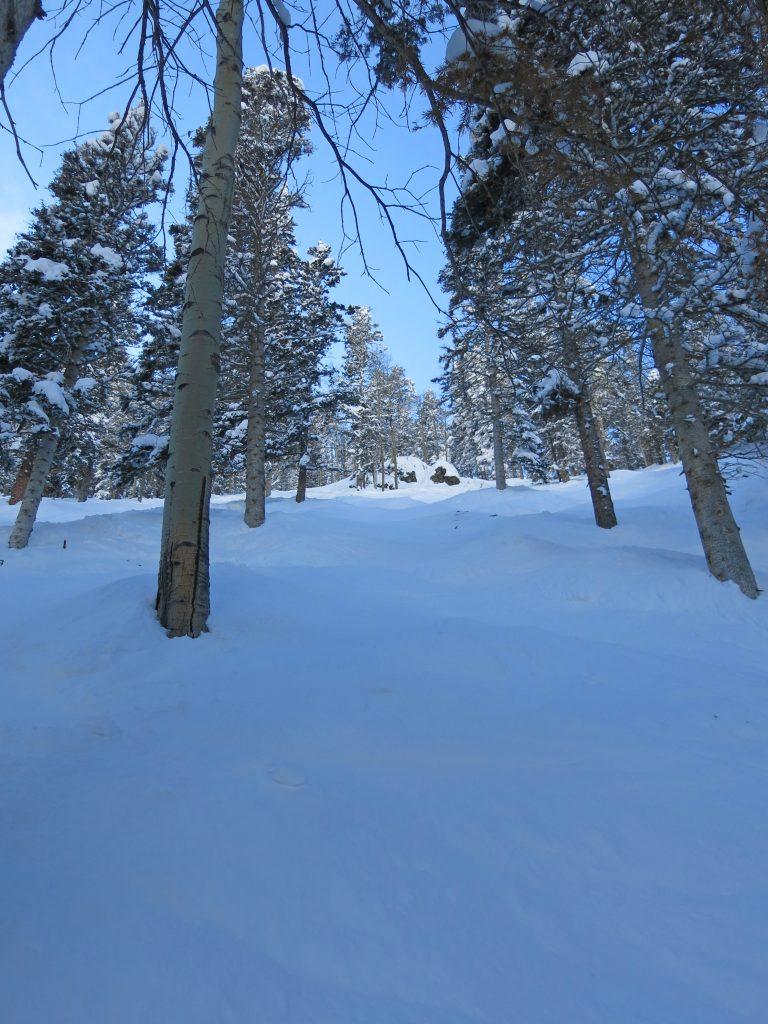 Ernie's run at Taos, January 2015