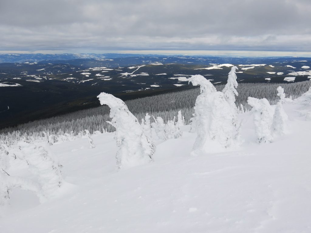 Snow Ghosts at the top of Big White, February 2017