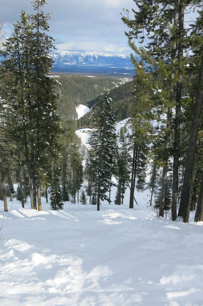 Kimberley tree skiing, February 2018