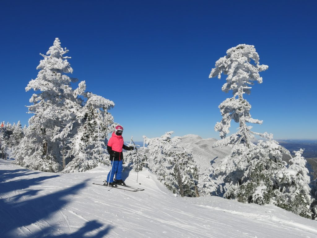 The namesake trees at Sugarbush, January 2019