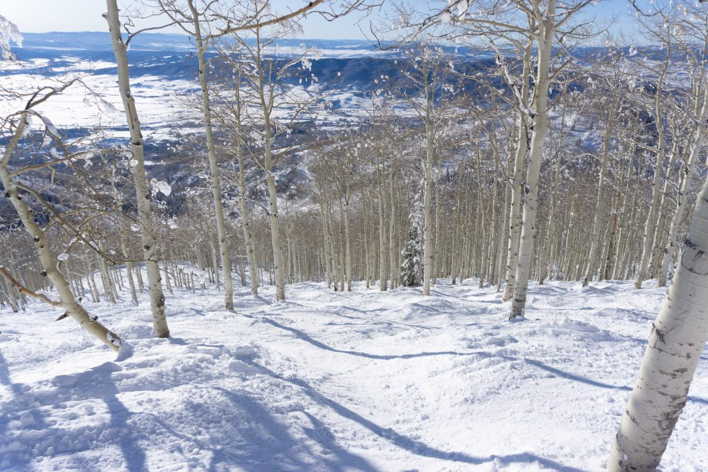Shadows tree skiing at Steamboat, December 2019