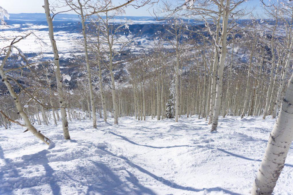 Shadows tree skiing at Steamboat, December 2019