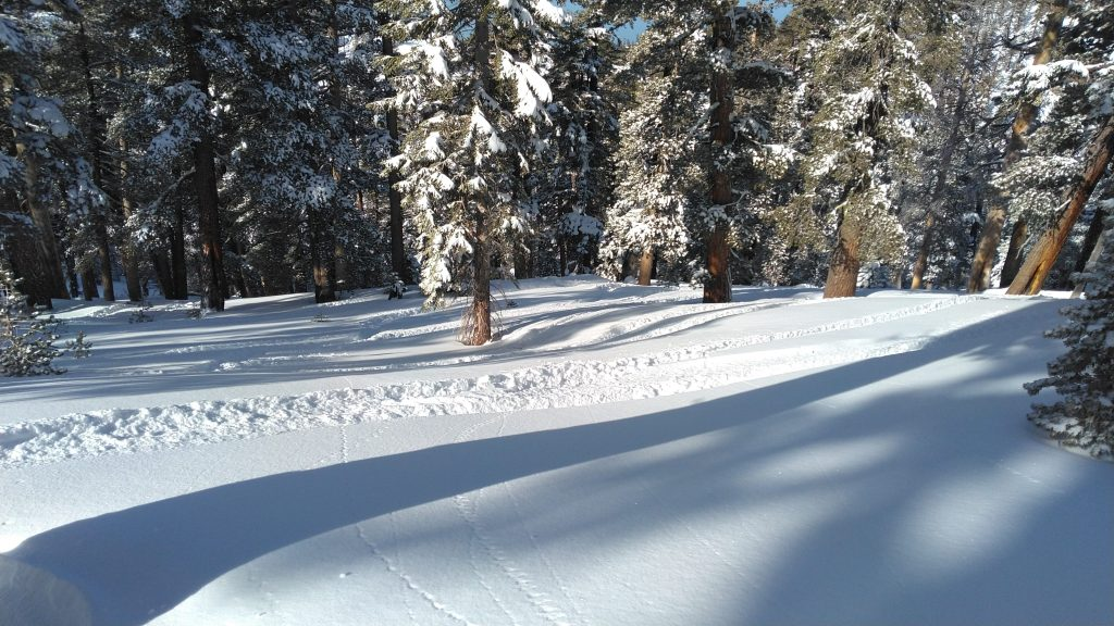 Heavenly powder in the trees, January 2020