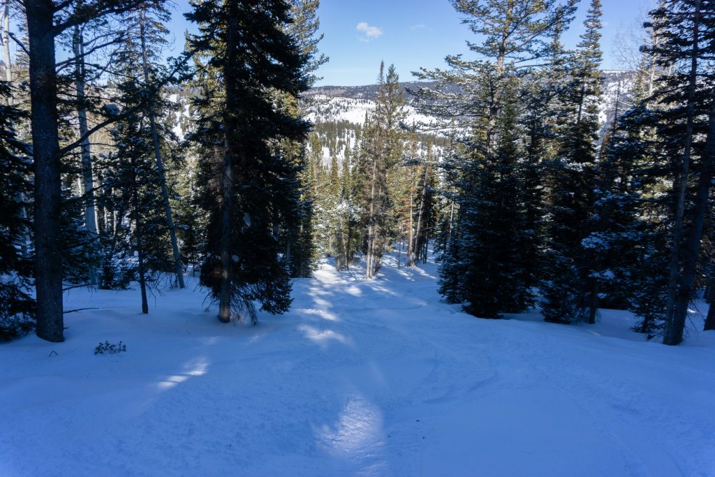 Trees off of Marge's Triple at Beaver Mountain, February 2020