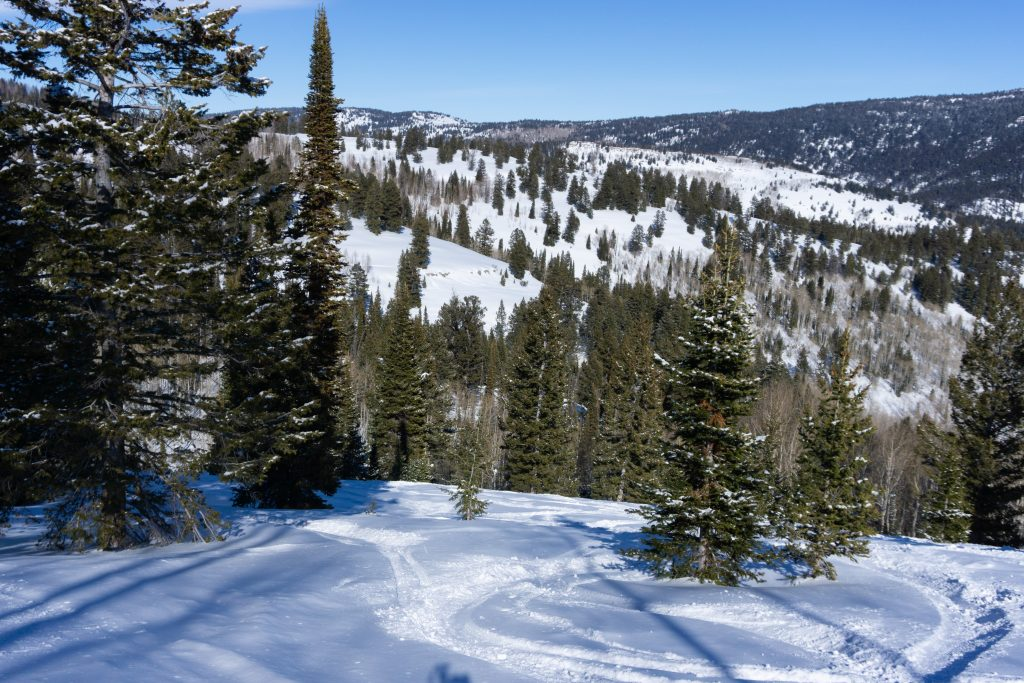 Powder north of Ted's Rock at Beaver Mountain, February 2020