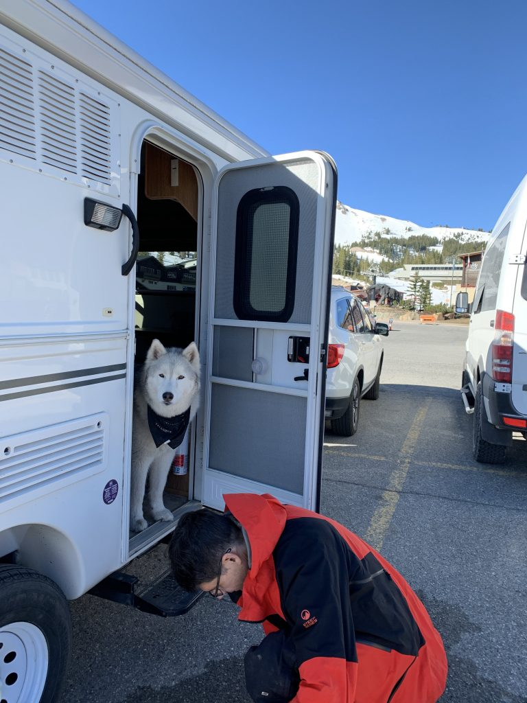 Sammy the Husky hangs out in the trailer at the Mammoth Main Lodge parking, May 2021